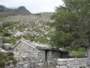 Bergerie d'Asinao
